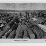 logging scene